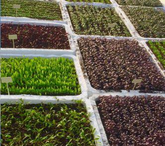 cajas-sembrar